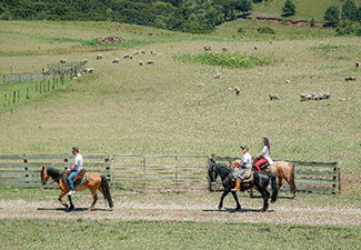 Passeio a Cavalo na Fazenda Santa Barbará