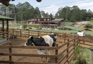 Smart Farm  Fazendinha
