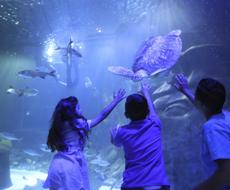 Sea Life Aquarium + Madame Tussauds