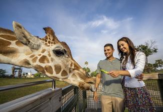 Two Park Ticket - SeaWorld® e Busch Gardens