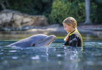 Ultimate - Discovery Cove® + Sea World® + Aquatica + Busch Gardens