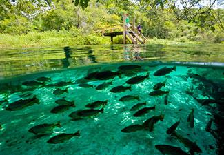 Barra do Sucuri - Com Transfer de hotéis em Bonito