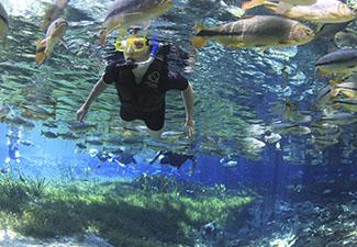 Aquário Natural Baía Bonita - Com Transfer de hotéis em Bonito