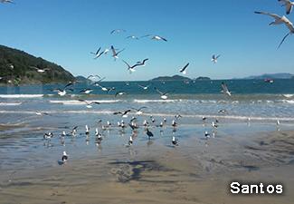 Tour Sul da Ilha - Saída de Hotéis em Florianópolis
