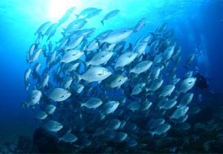 Mergulho Livre  - (Snorkeling)