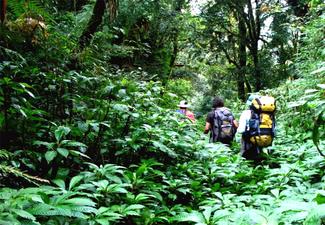 Tour de Sobrevivência na Selva