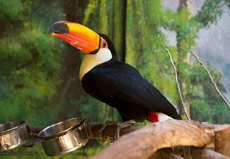 Parque Zoologico Buin Zoo