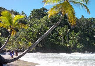Praias na Mata com cachoeria de Tijuipe - Com Transporte