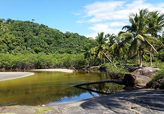 Trilha de jeribucaçu com praia e mangue - Com Transporte