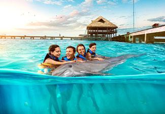 Nado com Golfinho - Royal Garrafon Vip Swim