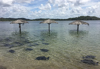 Praia de Caueira + Lago dos Tambaquis - Saída de Aracaju