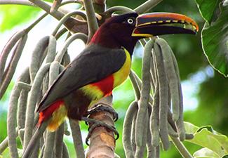 Observação de Aves (Rio da Prata)