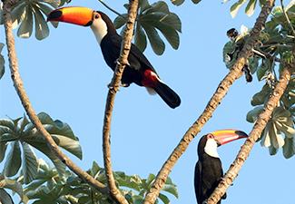 Observação de Aves (Estância Mimosa)
