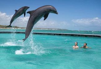 Dolphin Action (Intermediário)