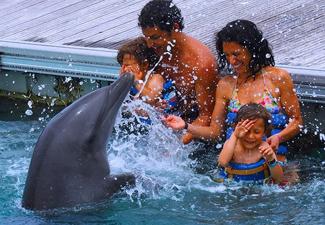 Dolphin  experience (Básico)