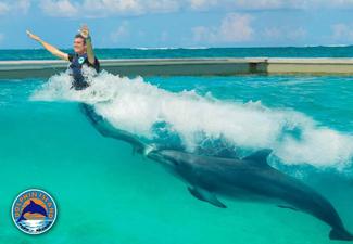 Dolphin  Royal Swim (completo)